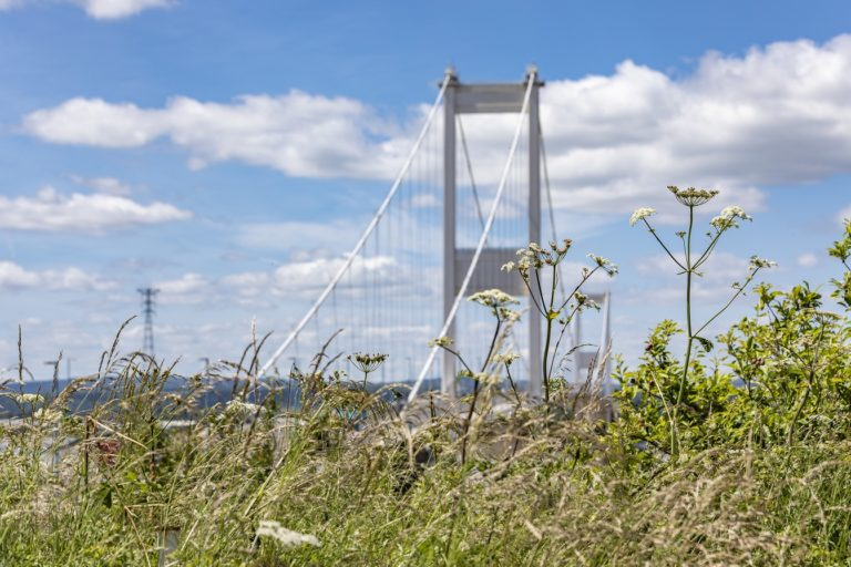 Picture of the Severn Crossing with wildflowers in the foreground