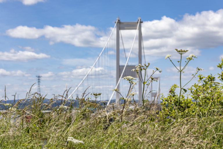 The Severn Crossing behind a meadow of wildflowers